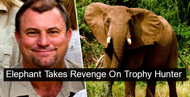 Big game hunter crushed and killed by wounded elephant