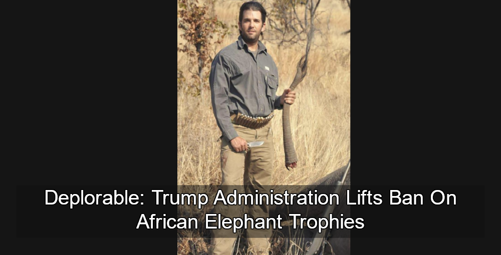 Trump Lifts Ban On African Elephant Trophies (Image - Donald Trump Jr with dead elephant - via Twitter)