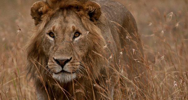 Cecil the Lion, Planned Parenthood and Moral Blindness