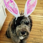 hoppy Easter from Rational Doubt!