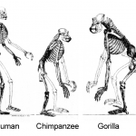Why People Hate Evolution