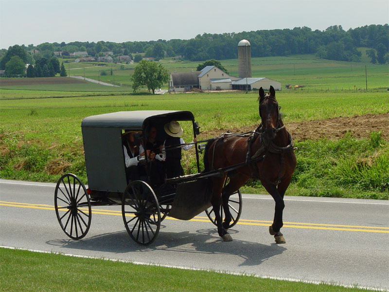 Amish in buggy