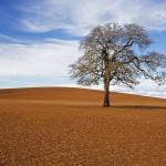 Kingdom of God: Is it Bigger than the Church?