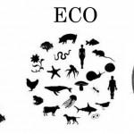 Ego, Eco, Evo