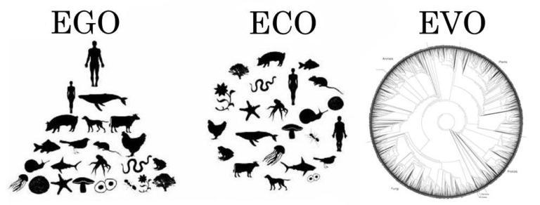 ego  eco  evo