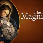 Magnifi-Cat