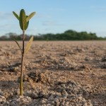 Advice for the New Christian: Grow Where God Planted You