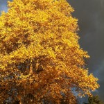fall tree and sky