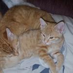 Kitten butts make the nicest pillows.