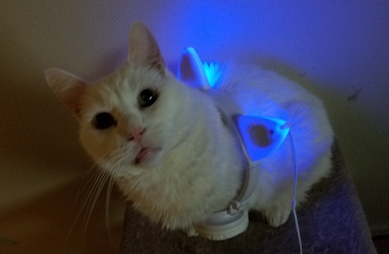 These are my new headphones. Snow was curious about them so I let him model. Amazingly, he didn't mind this at all. He was more wondering what my damage was than he was annoyed at having headphones set over his back.
