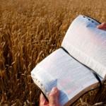 Bible - harvest-bible-istock - 1