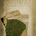 """Variations on a Bible Collage"" by Billy Alexander (2014), via FreeImages.com"