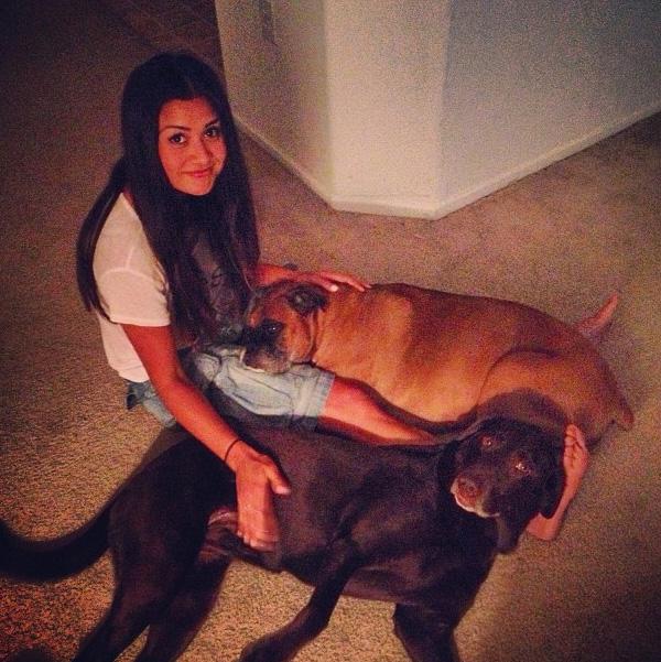 dogs_catherine_giudici
