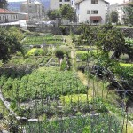Vegetable gardens in Slovenia (photo by Simon)