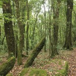 Ancient monoliths in Mawphlang sacred grove, India