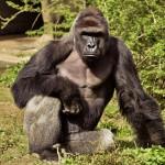 Death of a Gorilla: A Sentimental Holocaust