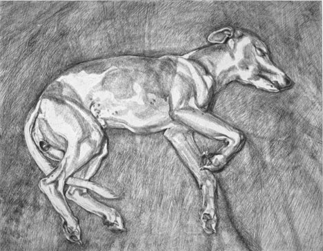 Lucian Freud's whippet is only sleeping.
