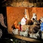 nativity scene cats