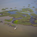 Oil from the Deepwater Horizon spill surrounds marshland south of Venice, La., June 19, 2010. (CNS/Reuters/Lee Celano)
