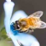 Easter bees enrich Easter Vigil