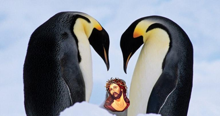 Creationist To Walk 2 Penguins From Antarctica To The Middle East