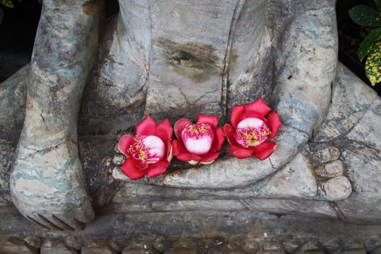 a close-up of a Buddha statue cradling three magenta flowers in his cupped hand