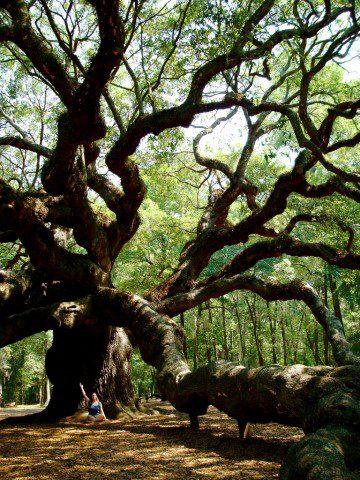 """Meditation under the Angel Oak"" © Alison Leigh Lilly"