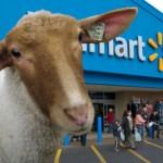 Walmart.sheep