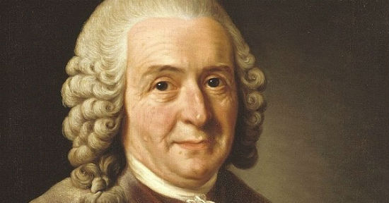 "Carl Linnaeus stooped to name-calling in his ""Systema Naturae."" What an uncivil homo sapiens."