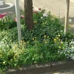 Urban_Gardening_Bielefeld