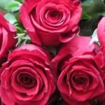 roses800-240x300