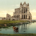 "Whitby Abbey - ""bare, ruined quires"""
