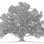 How Can You Heal Your Family Tree?