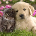 Compassion, Puppies and Kittens