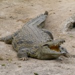 On Crocodiles, Cannibals and Corpses