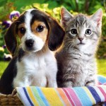 Puppies, Kittens and the Circles of Sin