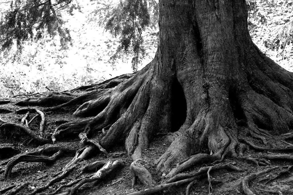 Renewal in the Church: Send My Roots Rain