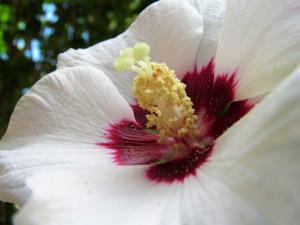 pollen-2657009_640