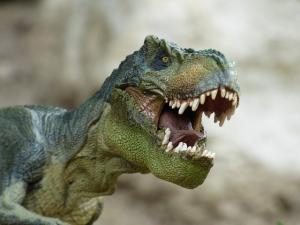 tyrannosaurus-855188_640