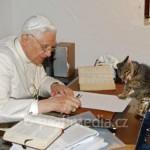 pope cat