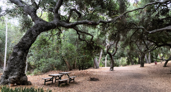 Temescal Gateway Park, photo by Cassidy Hall