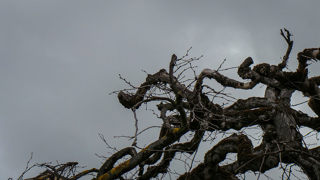 """Tortured Tree"" Image: Theen Moy / Flickr (Creative Commons)"