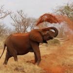 When We Create Elephants