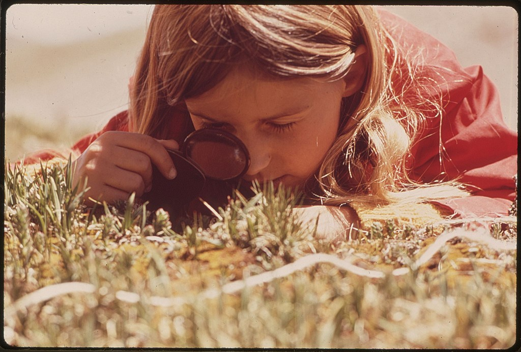 GIRL_USES_A_MAGNIFYING_GLASS_TO_STUDY_PLANT_LIFE_IN_THE_TUNDRA_OF_THE_ROCKY_MOUNTAINS._THE_DENVER_PTA_SPONSORED_A..._-_NARA_-_543740