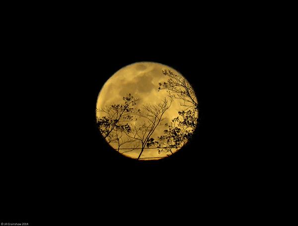 Vigilant-Moon