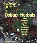 An Orisha Oshun Herbal