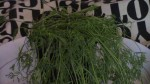 Video Lilith's Garden: Dill