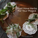 9 Absolutely Must Have Herbs For Your Magick
