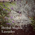 Herbal Magick: Lavender