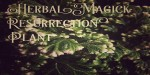 Herbal Magick: Resurrection Plant or Rose of Jericho